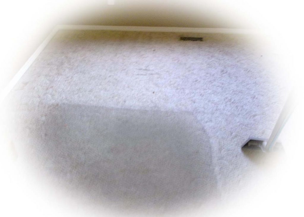 Basic Carpet Stain Removal North Booval